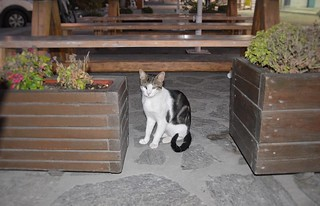 DSC_5961_cats0919