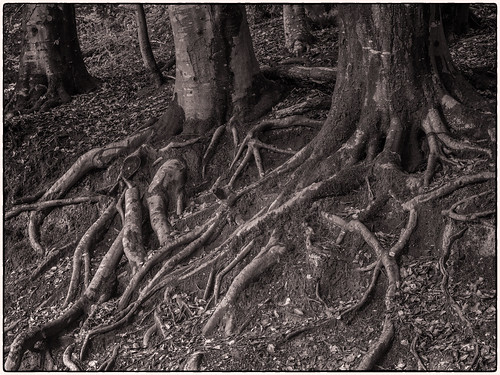 Tree Roots...
