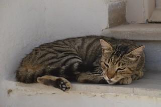 DSC_5996_cats0919