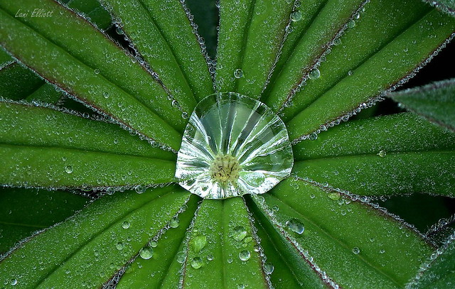 Dewy Droplets