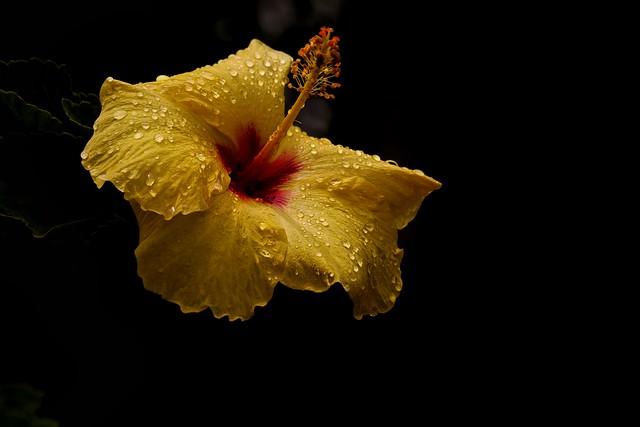 Garden Tears