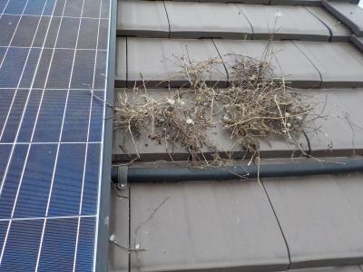 從屋頂太陽能板清出來的鳥巢。