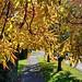 #galaxynote10plus #fl #fb #nofilter #derby #oakwood #uk #eastmidlands #england #emowalk #sky #skies #autumn #autumnleaves