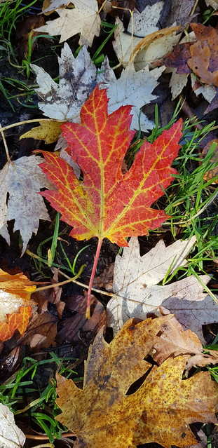 The Fall @ Chatsworth