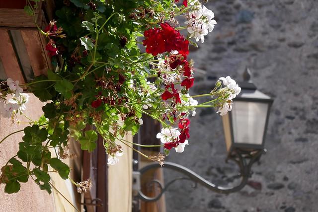 Calizzano in fiore