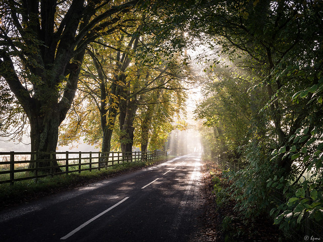Autumn in The Avenue