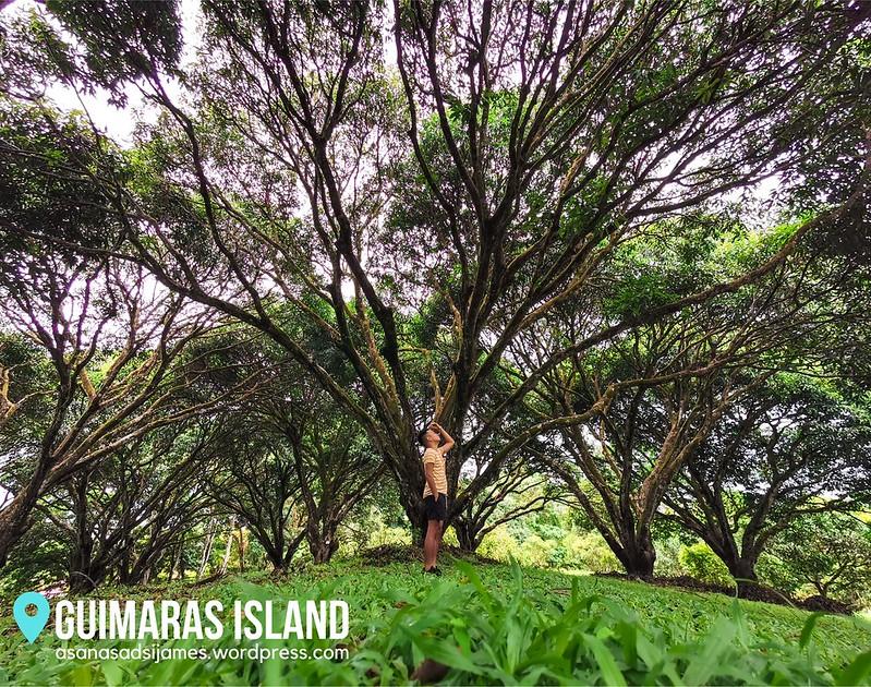 GUIMARAS ISLAND 19