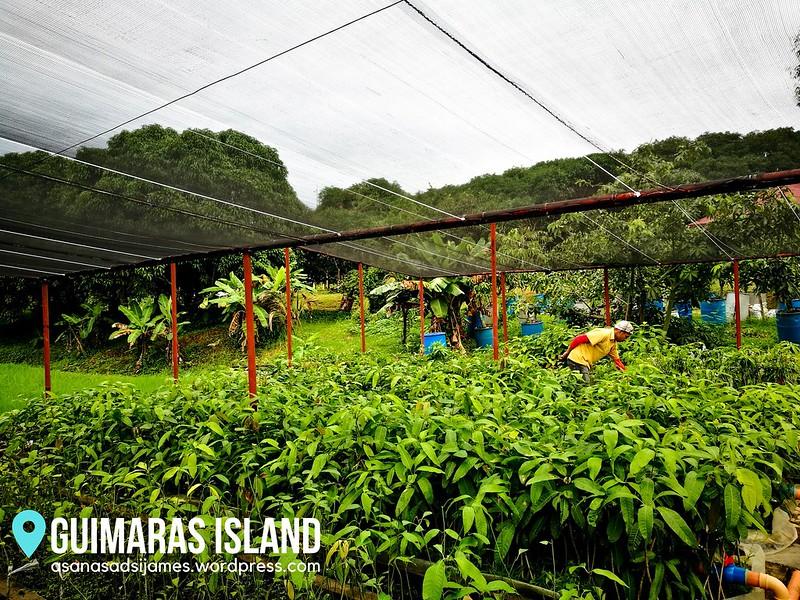 GUIMARAS ISLAND 16