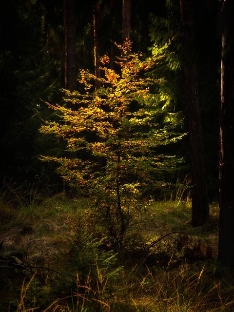 Longing for light - Sehnsucht nach Licht