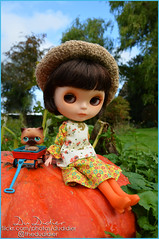 Find the Largest Pumpkin in the Patch (for Blythe a Day Oct-17-2019)