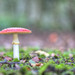 Fungi ~ 4277H9