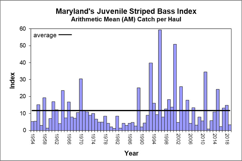 Graph of juvenile striped bass index results, 1954 to present.