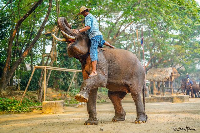 Thailand Elephant and Cornac - Ben Heine Photography