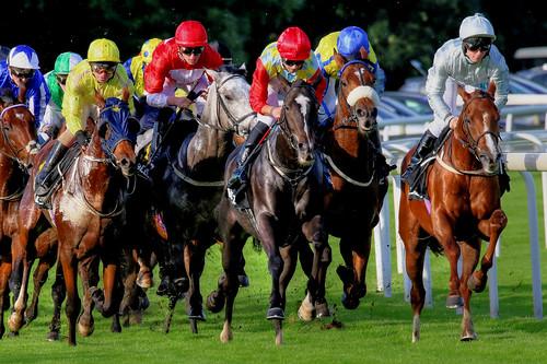 hdr photomatix horseracing horses thoroughbreds york knavesmire racehorses yorkraces races