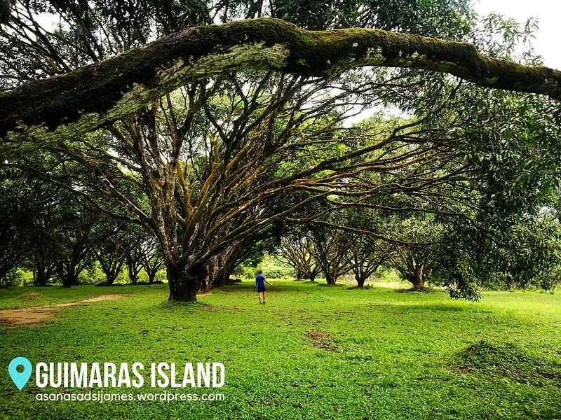 GUIMARAS ISLAND 17