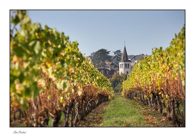 Un clocher dans les vignes