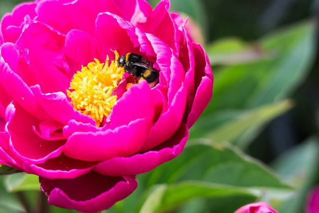 Nestled Bee
