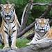 Zoo 10 16 19 689ad