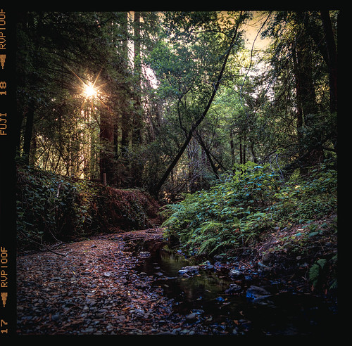 Light in redwood regional park | by Graham Gibson