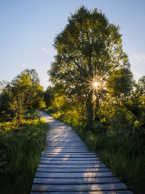 Walking on wooden paths in the High Fens