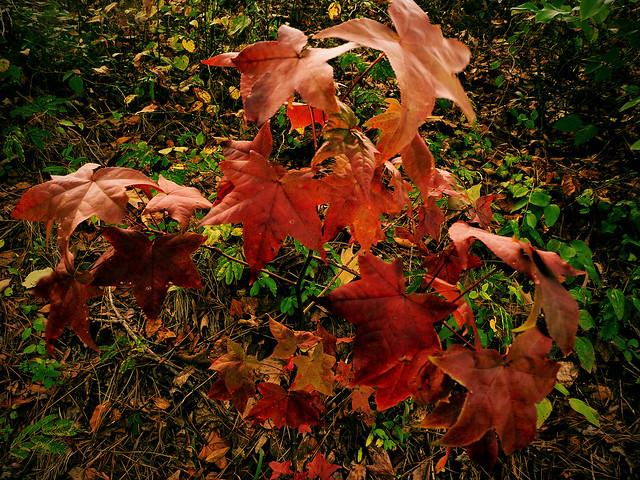 Colors of autumn (03)