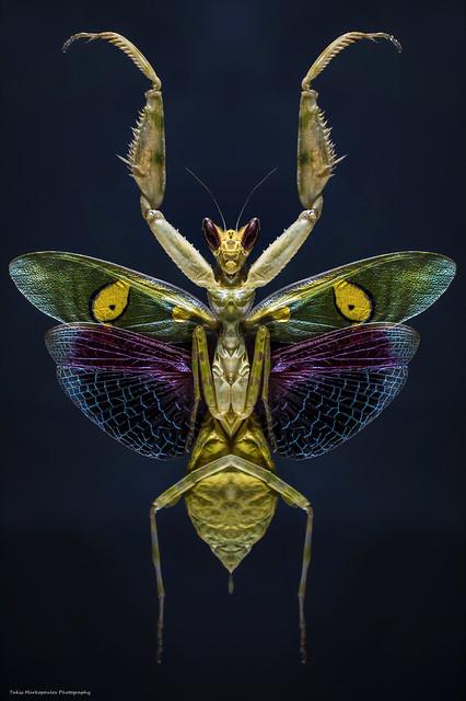 Flower Mantis !!!