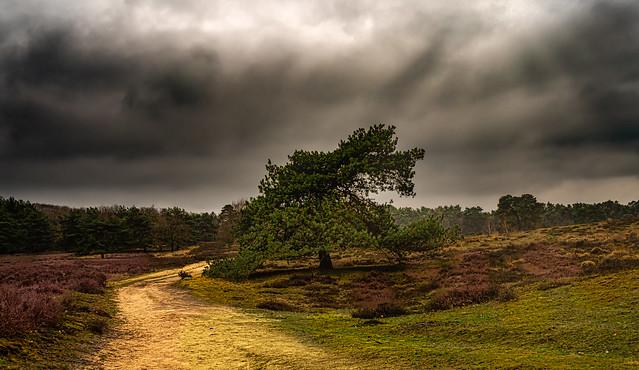 Westruper Heide ...