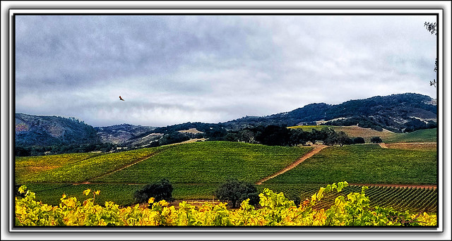 Kunde Vineyards