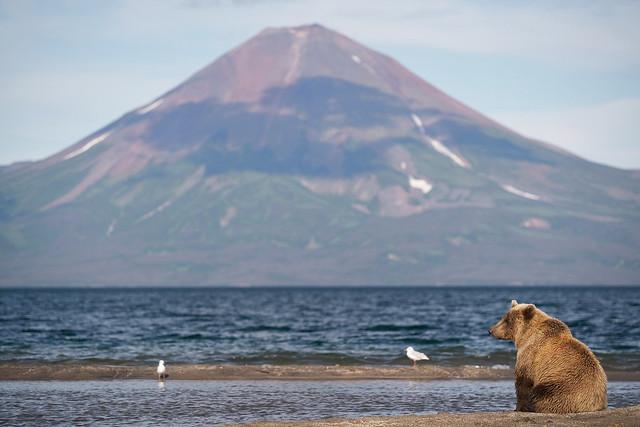 Классическое фото про грустного медведя, который ждёт твоего приезда на Камчатку.