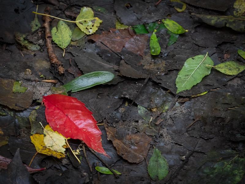 Feuillages d'automne... 48914736503_2dbf00a36a_c