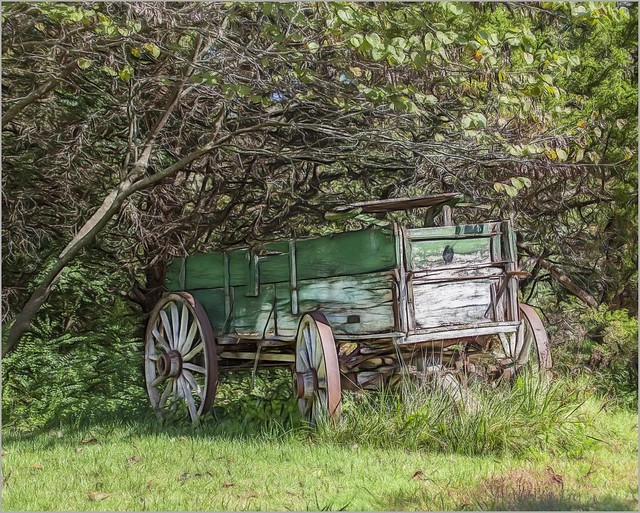 Wagon in the Woods