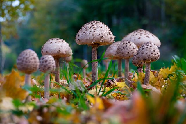 Bokehlicious Mushrooms