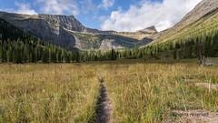 Path to Med Griz Lk GNP LR