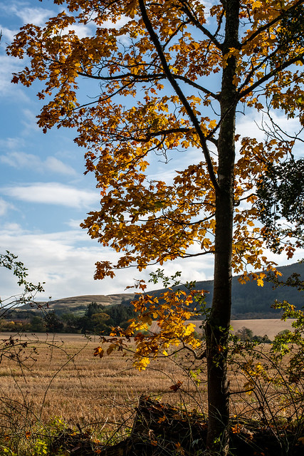 Perthshire Autumn