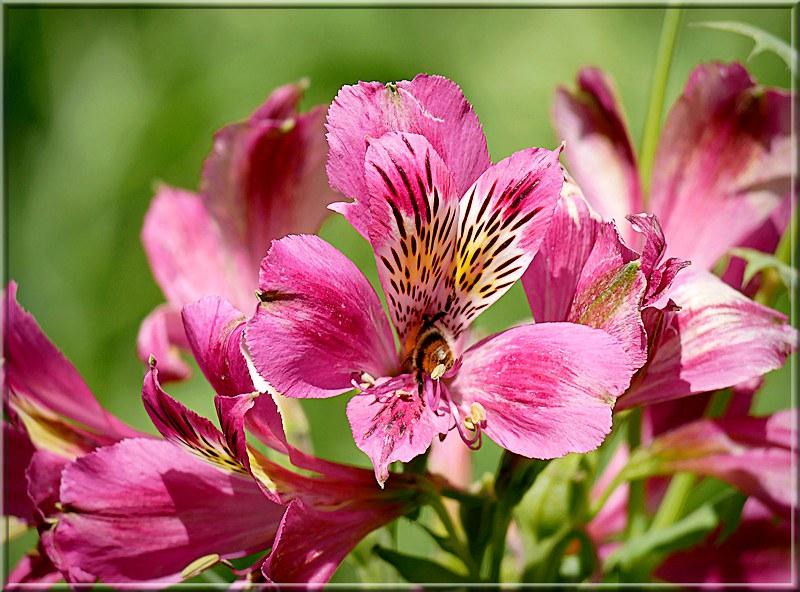 Au jardin des plantes. - Page 7 48915192753_2f46329c42_c
