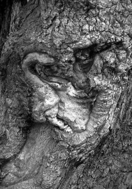 Gorilla In Tree