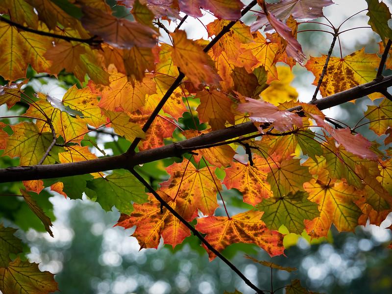 Feuillages d'automne... 48915281826_cac89e6a0c_c