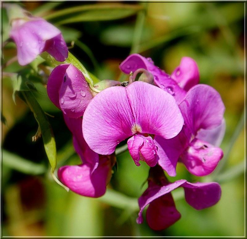Au jardin des plantes. - Page 7 48915926427_9f03b1a667_c