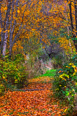 Autumn in Vancouver B.C © EXPLORE  (由  The Digital Surgeon is back