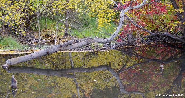 Tranquil Beaver Pond
