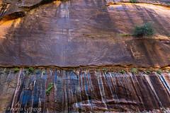 Zion National Park-21
