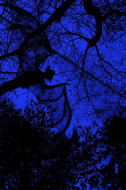 Bolting Bat (blue version)