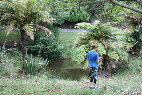 2019 Western Bay interschool-orienteering