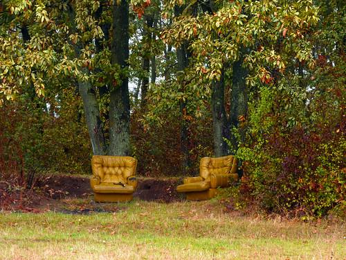 landscape ilfov românia brănești autumn fall hilarious forest