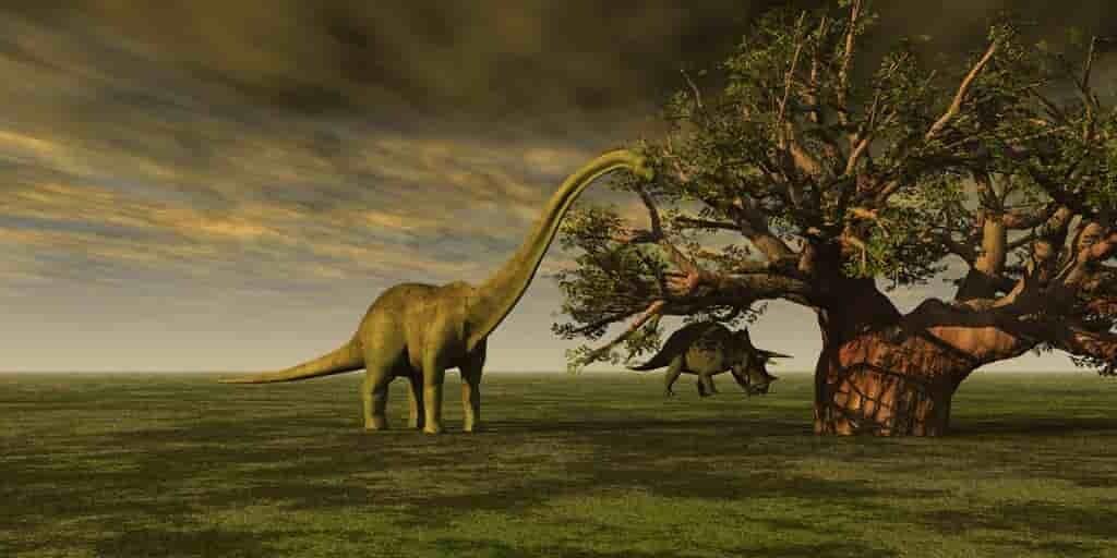 les-sauropodes-ont-grandi-en-mangeant-des-super-aliments