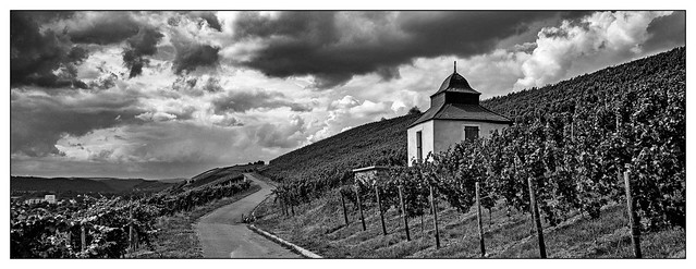 Clouds over the wineyard