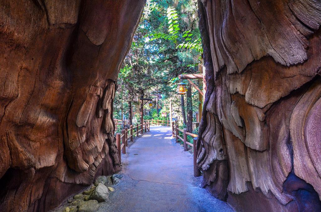Tree path DCA