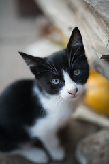 Cute little cat looking at the camera.