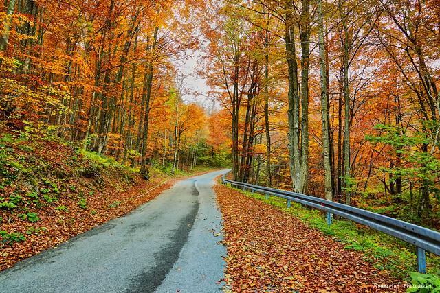 Jesen u šumi (3)