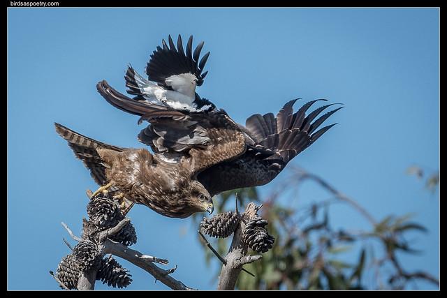 Black Kite, Mappie Lark: Time to Move On